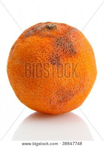 Rotten orange isolated on white