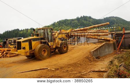 Forest Logging Forklift or mover working loading trees into saw at a lumber mill