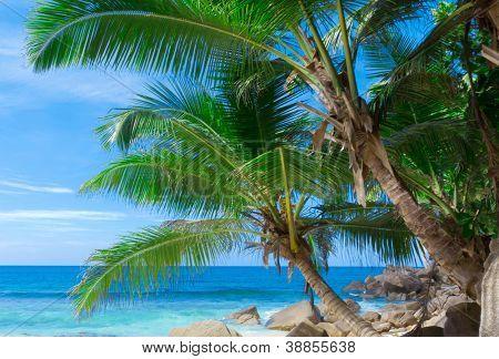 Trees Frame Paradise