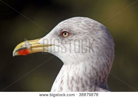 Pearched seagul by the water, nature photography, larus argentatus