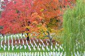 pic of arlington cemetery  - Arlington National Cemetery near to Washington DC - JPG