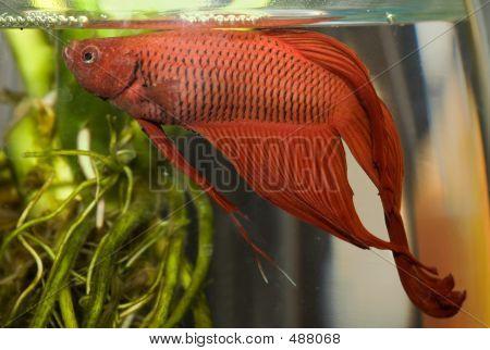 Water Life 004 Fish