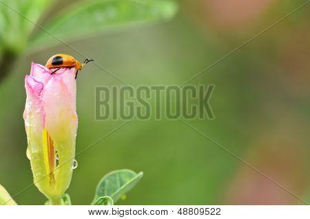 Life Of Ladybug