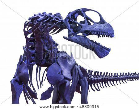 Tyrannosaurus Rex Skeleton On White