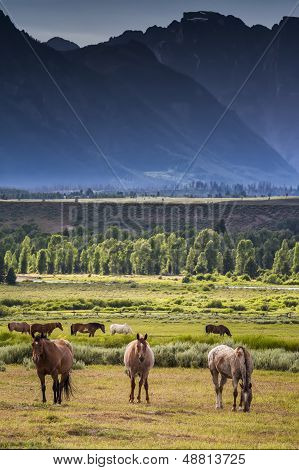 Grazing Horses In The Tetons