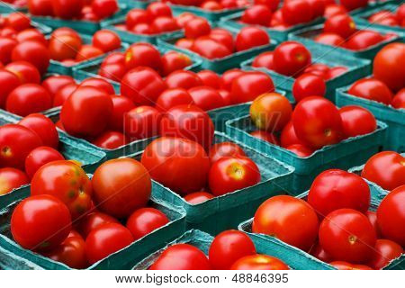 Rows of red ripe tomatoes in blue boxes at the farmers market