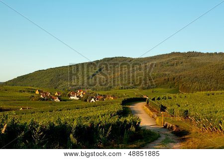 Morning view on Riquewihr wine village in Alsace France