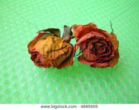Dry Roses 95 On Green Net