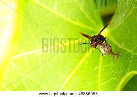 vesper and hive