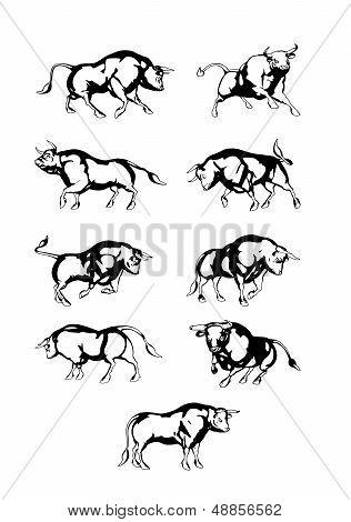 Vectorset Bull