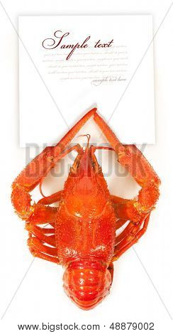Crayfish with a sheet in claws. isolated on white background