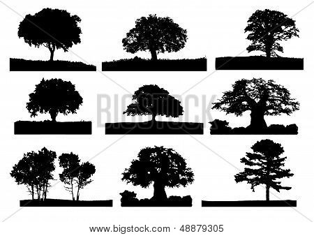 Trees Silhouette 004