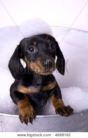 Dog In A Bath 5