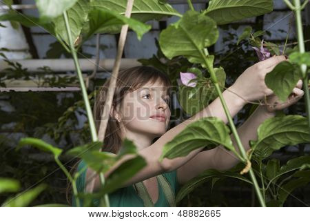 Young female botanist working in greenhouse