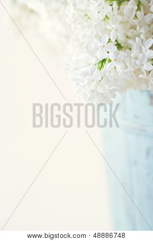 White Lilac Spring Flowers