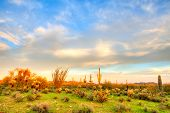 image of ocotillo  - Sonoran Desert at sunset with beautiful sky - JPG
