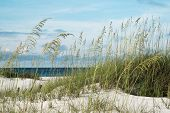 stock photo of dune grass  - Sea oats and native dune grasses in the sand dunes overlooking deep blue water of the Gulf of Mexico - JPG