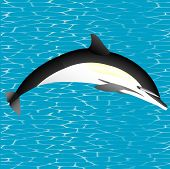 picture of orca  - Orca - JPG