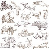 pic of platypus  - An hand drawn collection in one big set  - JPG