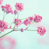 picture of small-flower  - Pink baby - JPG