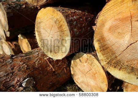 pile of sawed pine wood