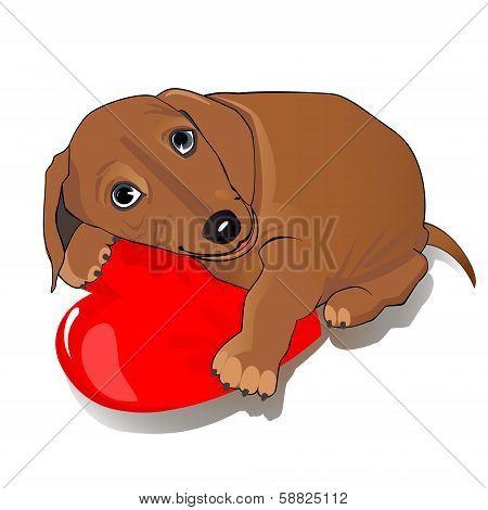 Dachshund dog heart