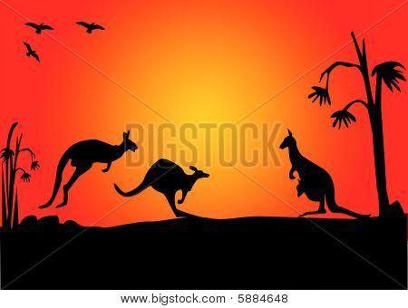 Kanagroo sunset