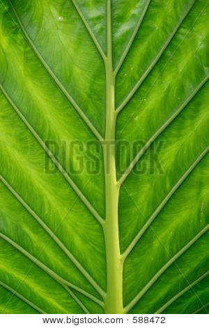 Green Exotic Leaf