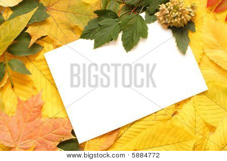 Leaves Of A Chestnut  - Nature Background