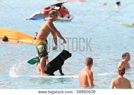 Dog goes stand up paddling