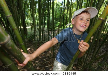 Boy In Bamboo Grove In  Sochi Arboretum