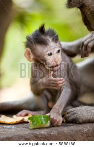 Cute Little Baby Monkey