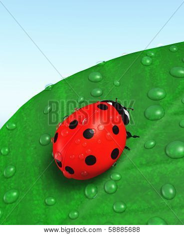 Ladybird And Leaf Covered With Dew