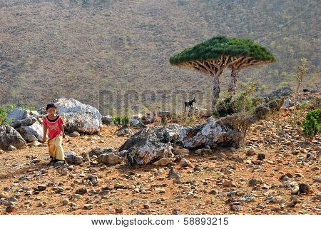 Socotra, Little Local Girl
