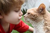 stock photo of domestic cat  - Boy kissing his cat  - JPG