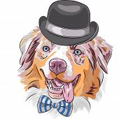 image of shepherds  - funny hipster dog Red Australian Shepherd breed  - JPG