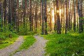 stock photo of low-light  - beautiful sunset in the forest - JPG