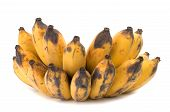 picture of festering  - Vietnamese yellow golden banana on white background