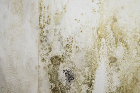 picture of spores  - Mildewed walls with different sorts of mold  - JPG