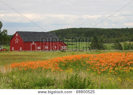 Rural Barn And Tiger Lilies