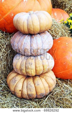 Stack Of Bumpy Pumpkin