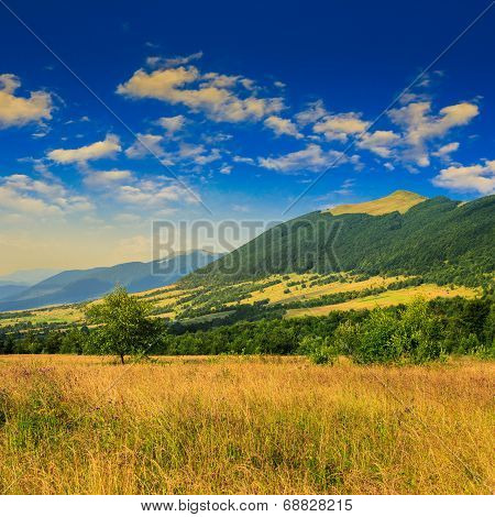 Trees Near Valley Near A Mountain Foot