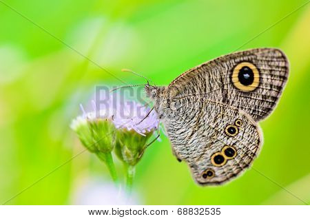 Close Up Of A Grey-brown Butterfly With