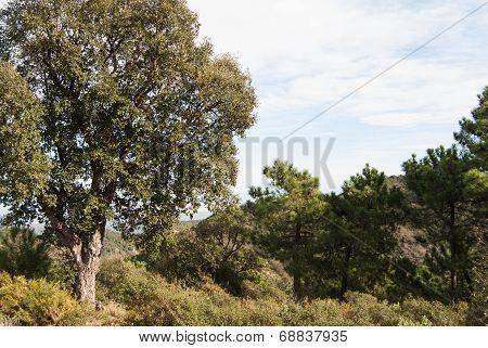 Sierra de Espada