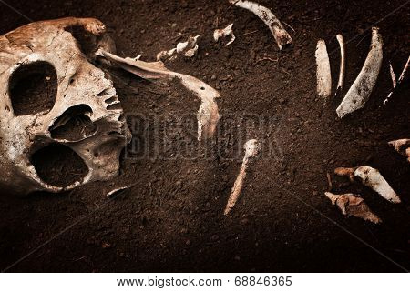 scene crime and buried bone