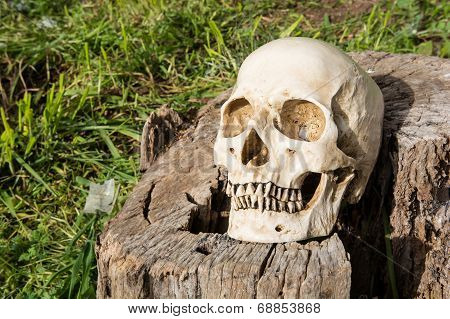 Skull With Log On The Sun