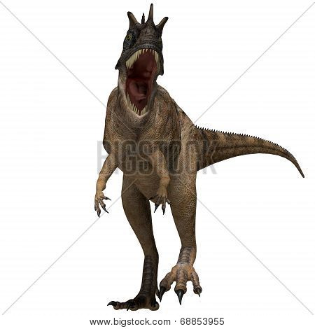 Ceratosaurus Dinosaur Profile