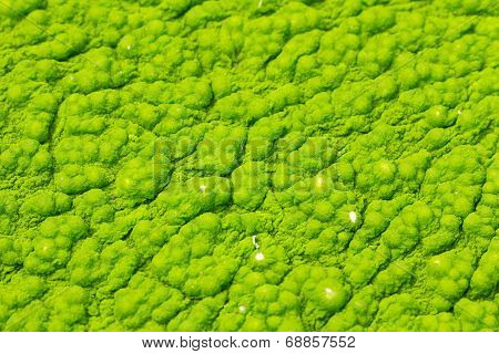 Macro Image Of A Mold