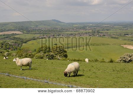 Countryside At Steyning. Sussex. England