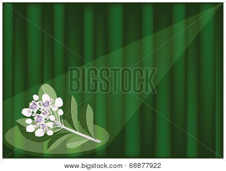 Calotropis Gigantea Flowers On Banana Leaf Background